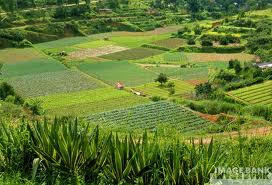 Que es la agricultura organica