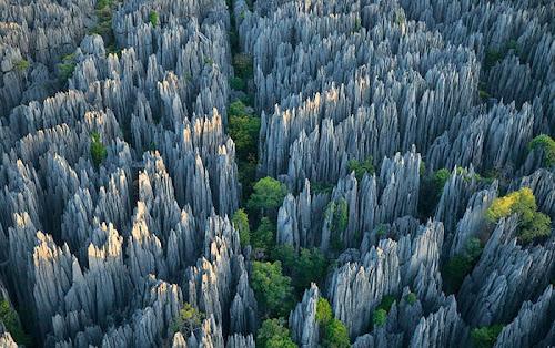 Floresta de pedra de Madagascar