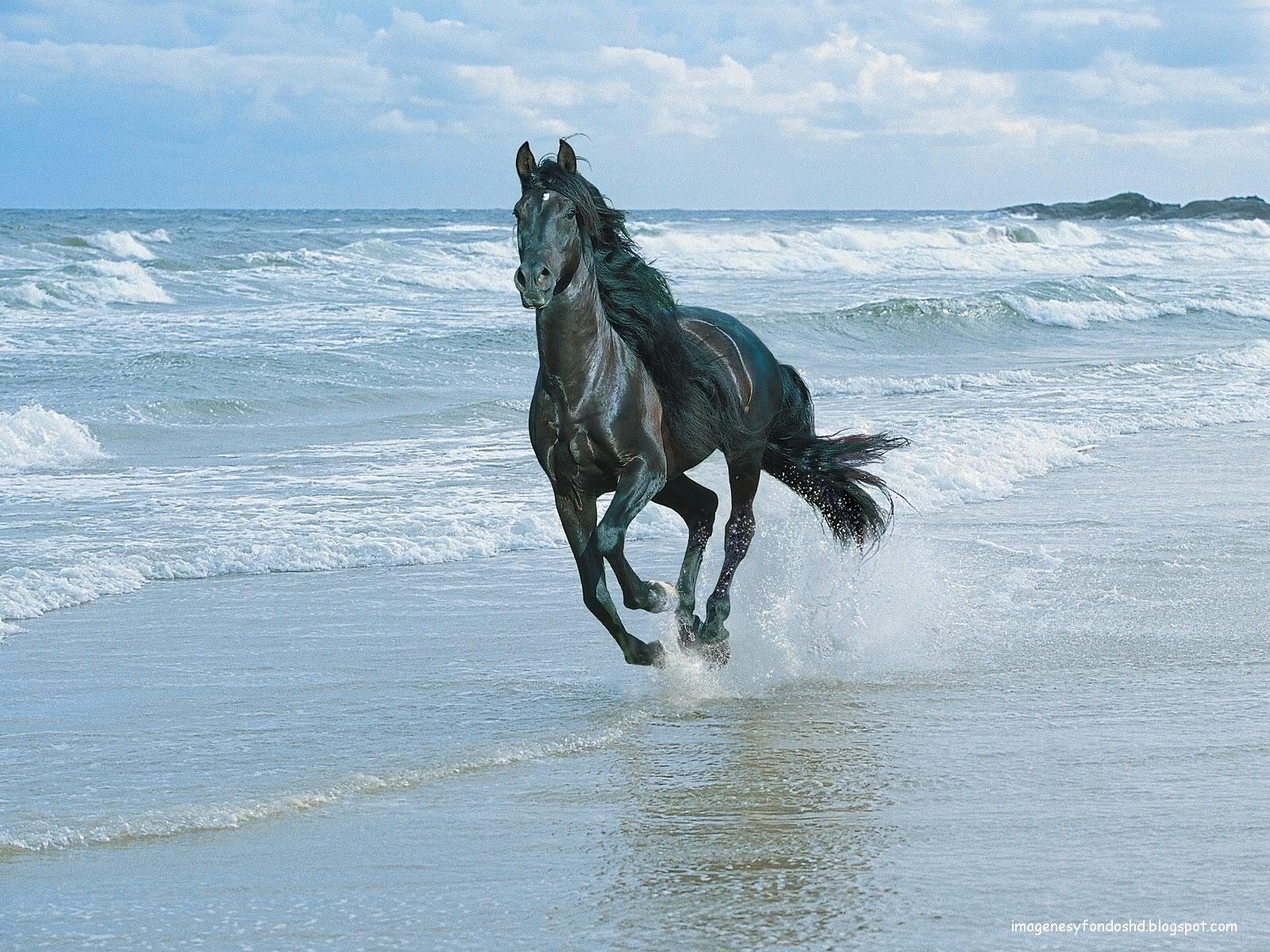 ganaderia caballo manga mar menor: