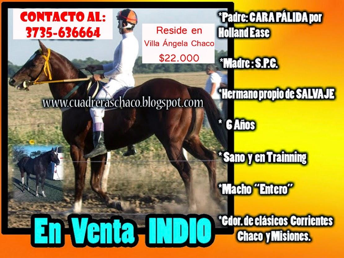INDIO EN VENTA 7-8-14
