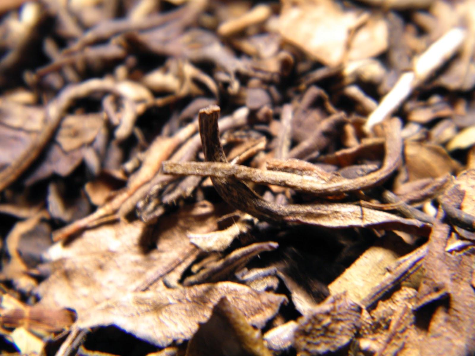 Bojenmi herbal tea - Ammount 4 9g In Dayi Gaiwan 100c