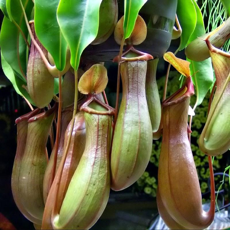 Hari Hari Indah 10 Tumbuhan Langka Di Indonesia