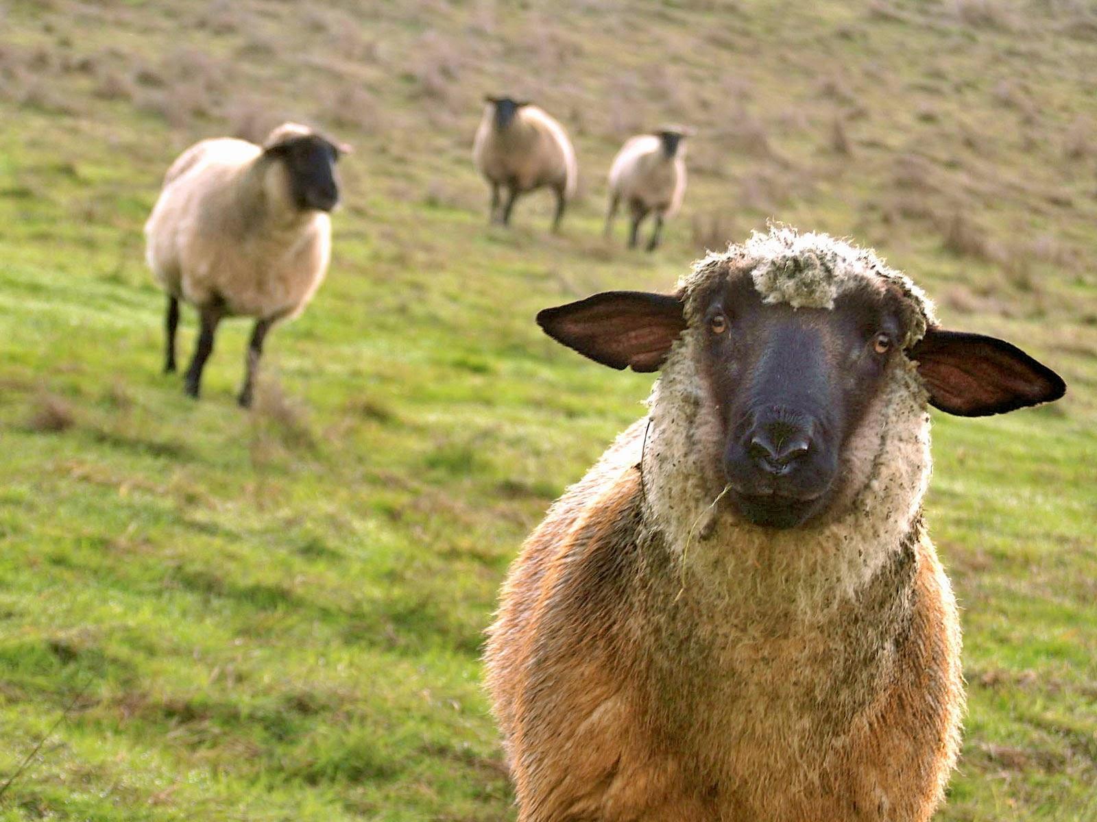 Секс с авцой 2 фотография