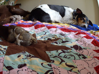 sleepy puppies on Lone Star Quilt