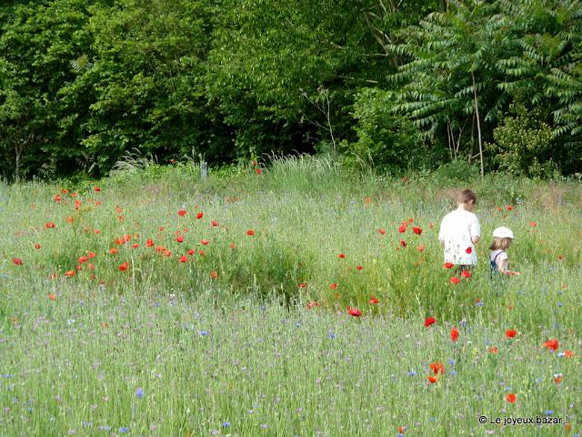 Giverny - sur les pas de Monet - coquelicots