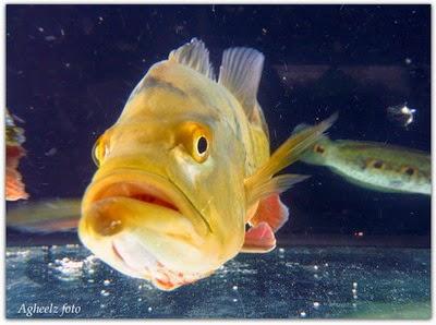Mengenali Hama Ikan