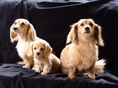 Cute Dog family Photo