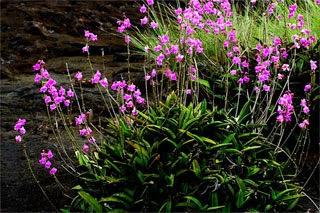 الحديقة الوطنية فولانجكا
