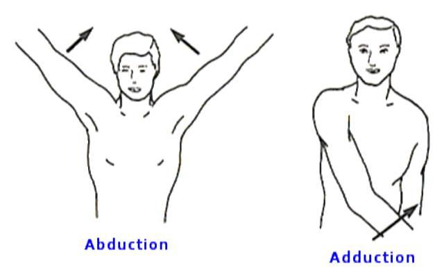 anatomía en la danza