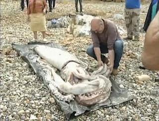 Γιγάντιο καλαμάρι ξεβράστηκε σε παραλία της Ισπανίας(εικόνες-βίντεο)