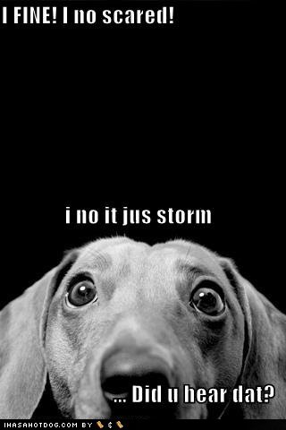 funny storm quotes
