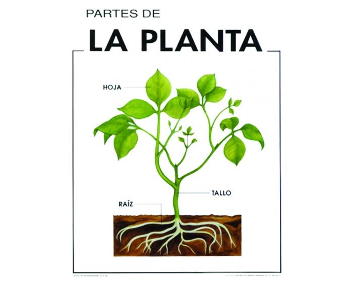 Educando con almery for Plantas fundamentales