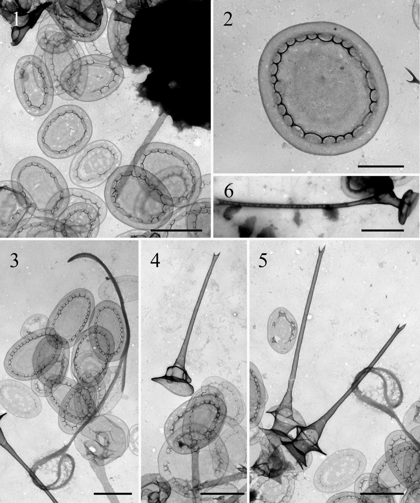 http://sciencythoughts.blogspot.co.uk/2014/03/a-new-species-of-golden-algae-from.html