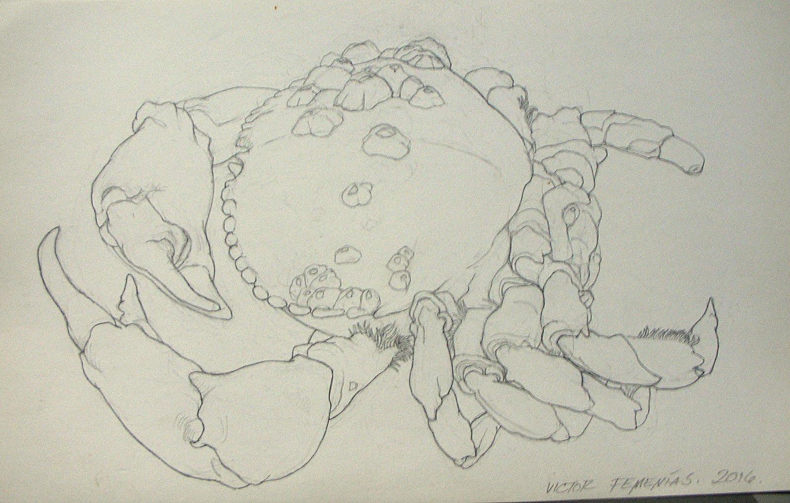 Estudio de cangrejo