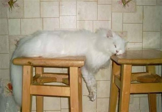 funny cat sleeps