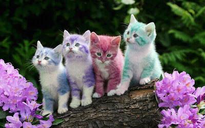 Gatitos de colores