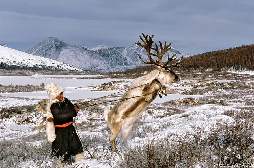 reindeer people Dukha people Hamid Sardar-Afkhami-7
