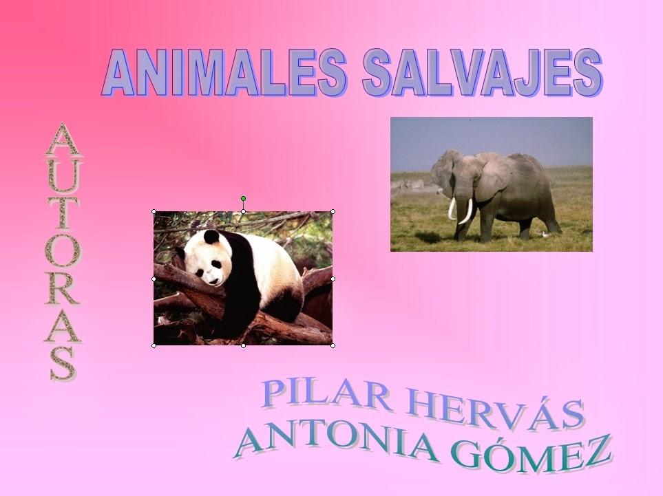 https://googledrive.com/host/0B0HB3L5SupKYcXQ5d2pWVGFkY0k/animalessalvajes.html