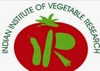 IIVR Recruitment 2014