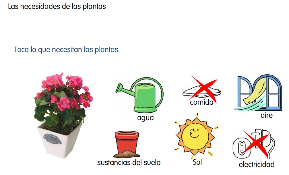 http://www.primerodecarlos.com/SEGUNDO_PRIMARIA/enero/tema1/actividades/CONO/plantas.swf