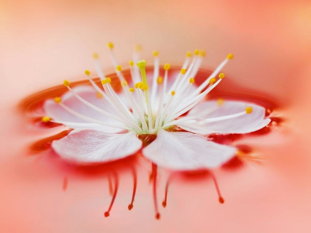 Group Of Simple Beautiful Flowers Wallpapers