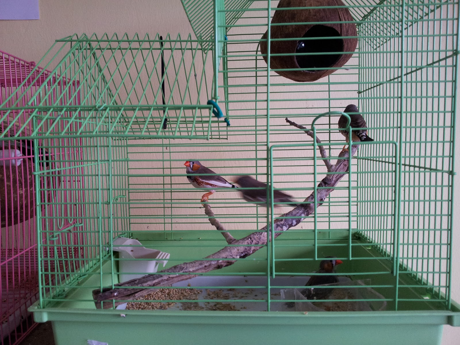 Image Result For Cerita Burung Finch