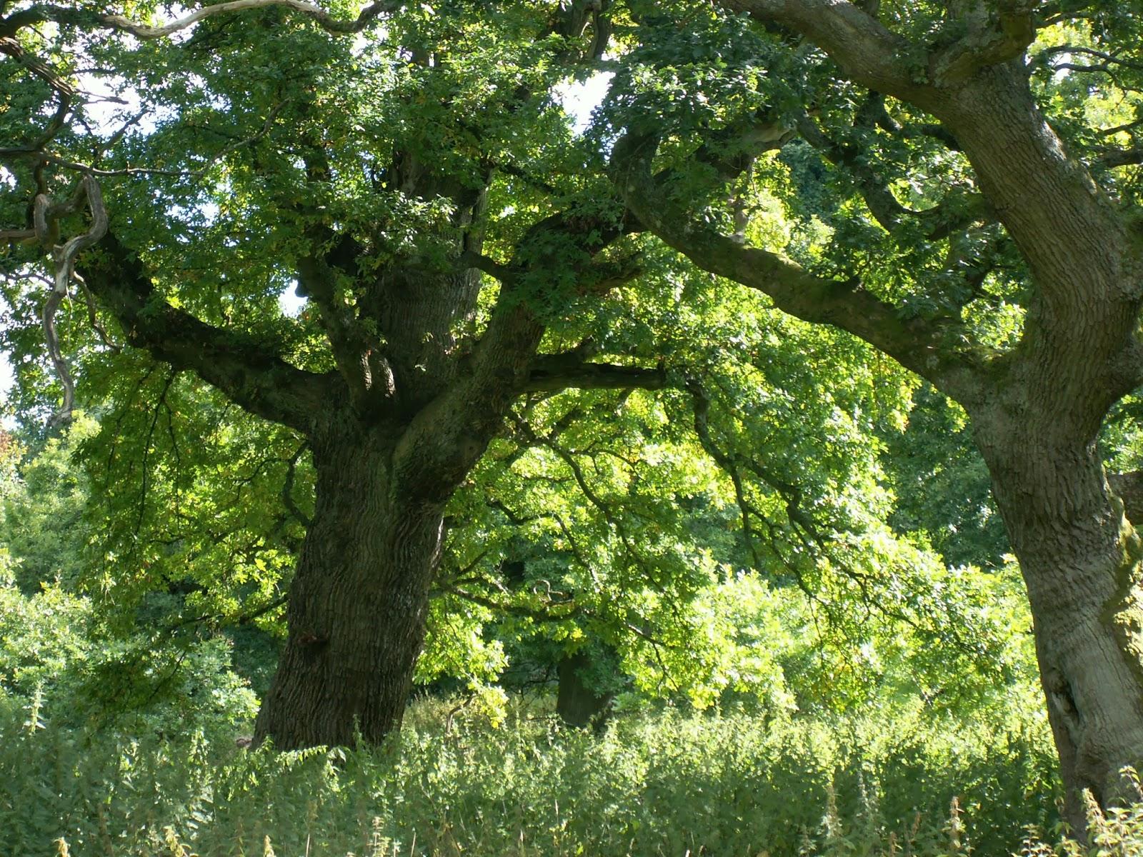 Cubo et excubo: cadzow oaks