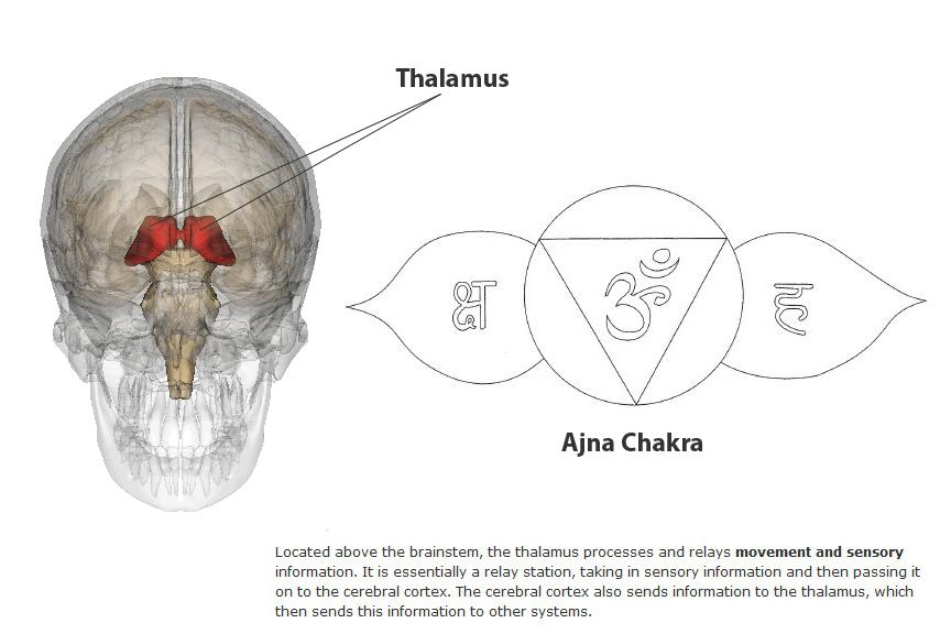 mindspace ajna chakra and the thalamus