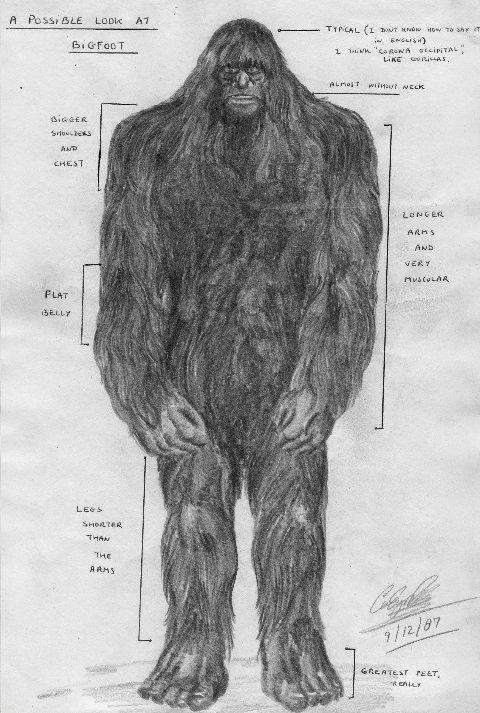 Sketch Artist Bigfoot