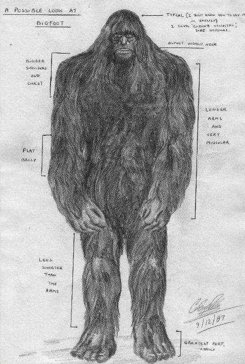 Sketch Artist Bigfoot
