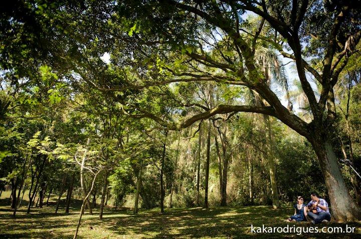 festa jardim botanico: para casamento e festa: Ensaio fotográfico lindo no Jardim Botânico