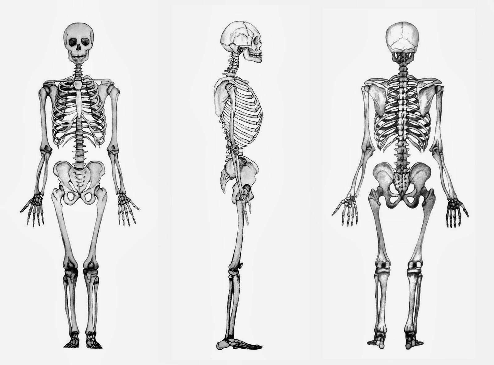 El esqueleto y sus enfermedades