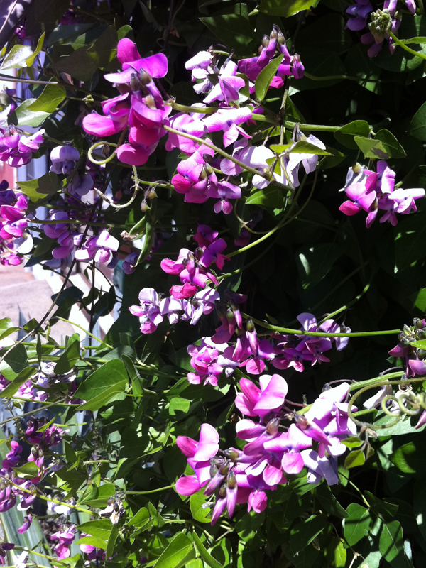 Pennsylvania Garden: May 2011