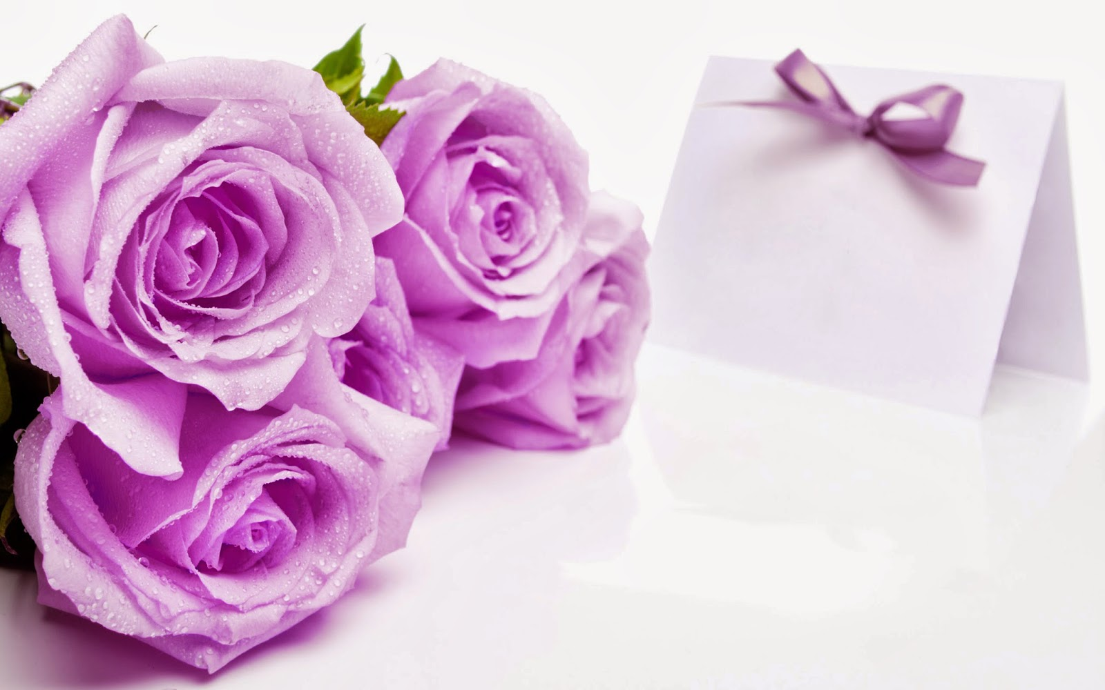 Beautiful Purple Color Roses Flowers Hd Wallpapers