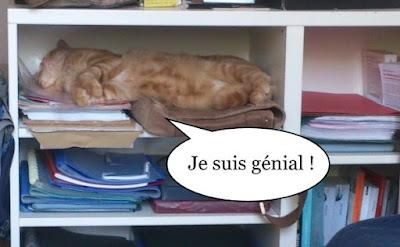 Chat roux heureux.
