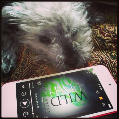 Murchie sprawls on a tapestried comforter, one ear raised as if in disdain. Before him is a white iPod with Half Wild's cover on its screen. It features swirls of green that suggest a howling wolf against a grey background.