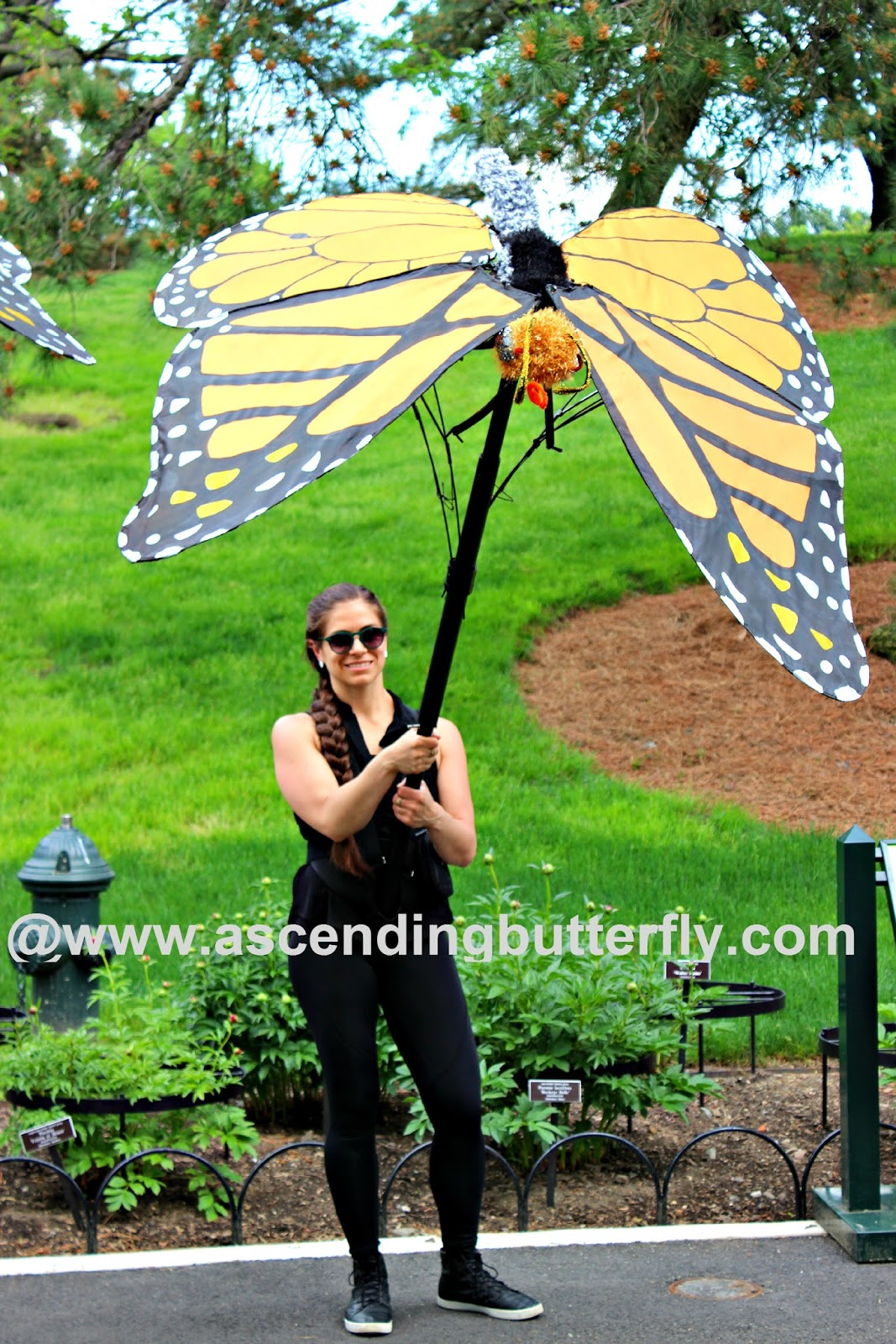 Ascending Butterfly Wordlesswednesday Giant Monarch