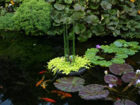 Koi fish care info for Backyard pond plants and fish