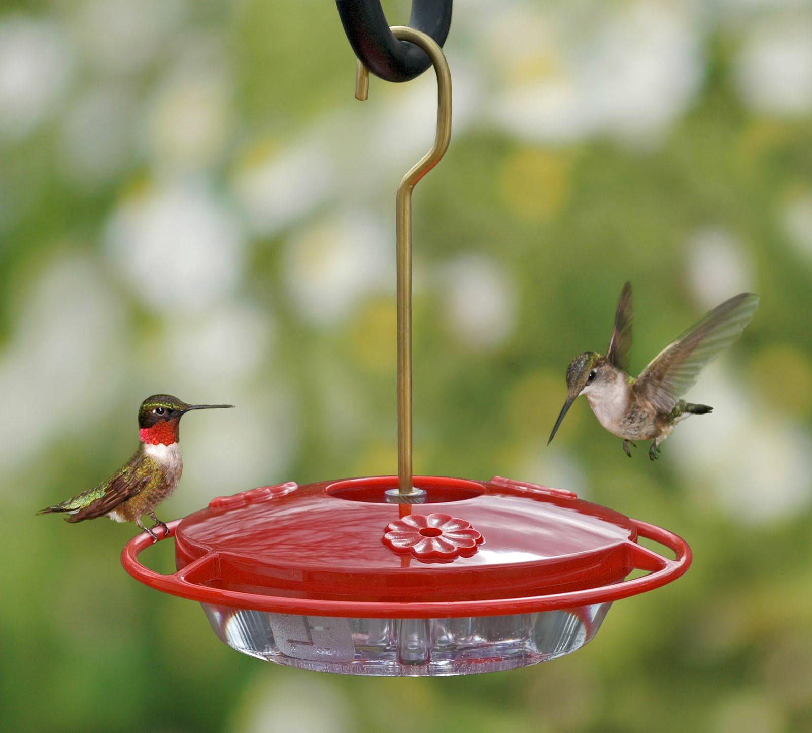 Best Natural Hummingbird Food