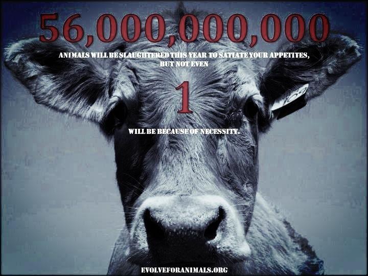Vegan Quotes Captivating Vegan Quotes  Meat Meets Vegan