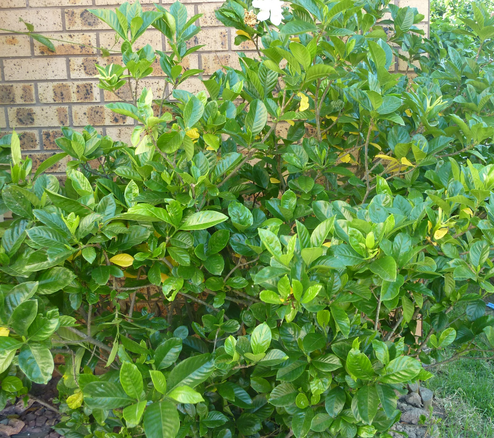Gardenia Bush http://motherhoodcareerfashion.blogspot.com/2012_01_01_archive.html