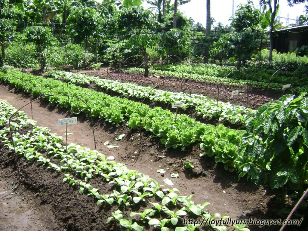 Batangas Coffee Plantation
