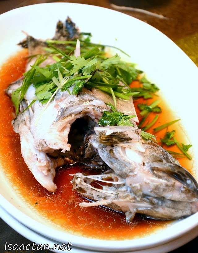#3 Steamed Dragon Garoupa Fish with Superior Soy Sauce