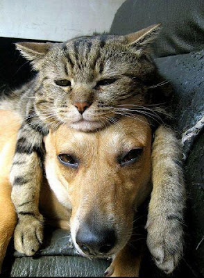 Perros y Gatos, dogs and cats