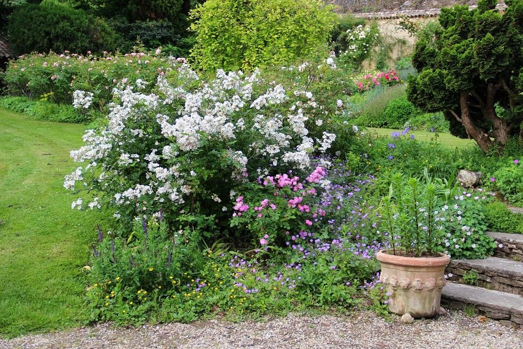 Partout des sc nes charmantes des associations reproduire - Derriere les murs de mon jardin ...