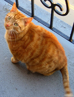 Orange cat with orange stripes