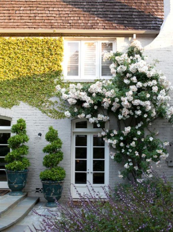 rosas en la puerta de casa