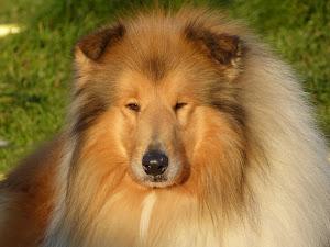 Pincha foto y verás pedigree.DISPONIBLE PARA MONTAS.DO RIPAUMIA BRIAREO.Nací el 13/12/2008