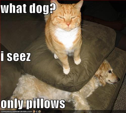 Image result for Funny Dog Pictures with Captions