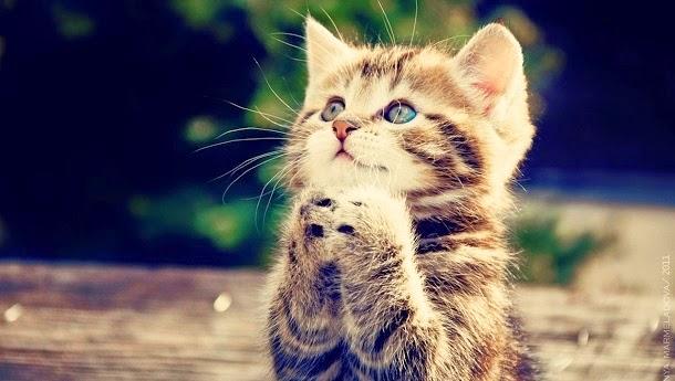 20 fatos curiosos que a ciência já descobriu sobre gatos